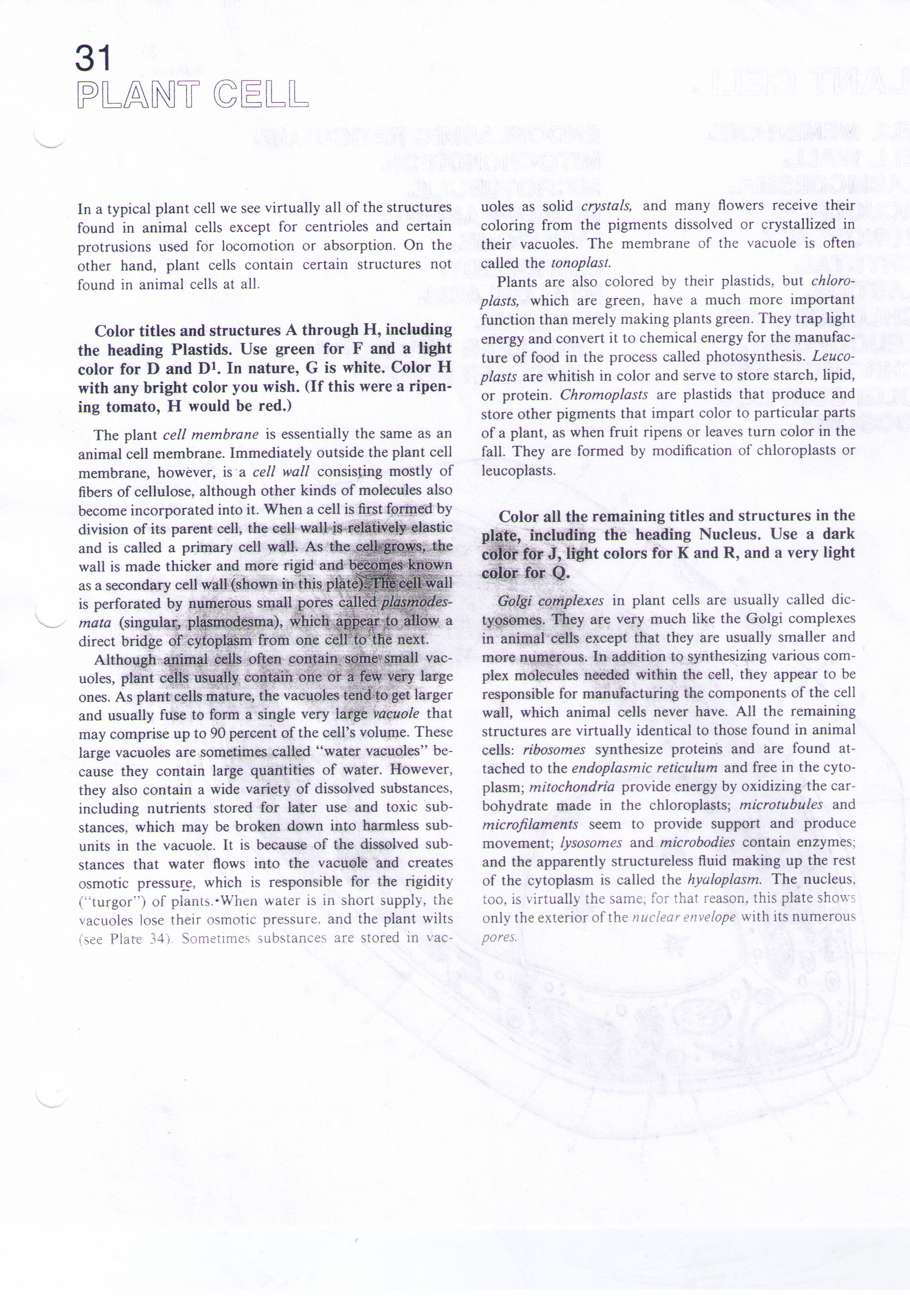 worksheet. Organelle Worksheet. Grass Fedjp Worksheet Study Site