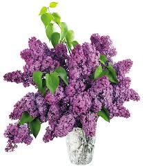 http://www.woodstown.org/cms/lib4/NJ01001783/Centricity/Domain/10/lilac.jpg